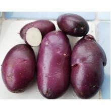 Картофель семенной Ред скарлет