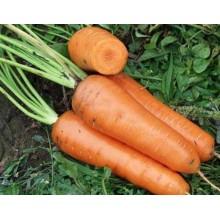 Морковь Канада 1 гр.