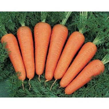 Морковь Канада 0,5г.