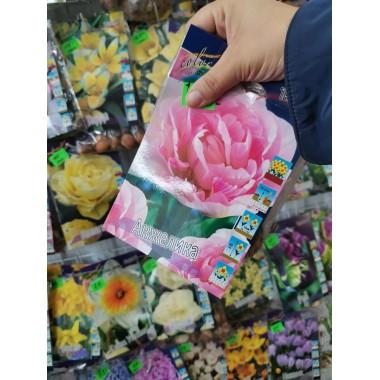 Тюльпан Анжелика